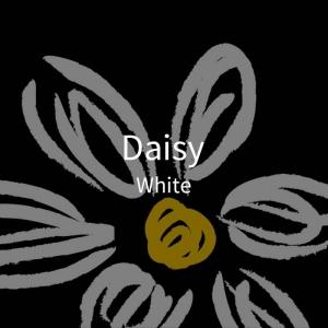 三折黑胶-雏菊-白2